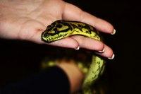 змея 4