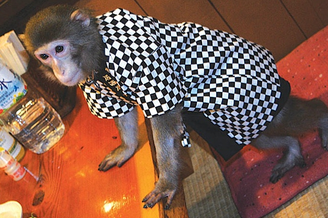 обезьяны в ресторане, обезьяна на съемку