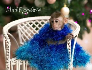обезьянка2