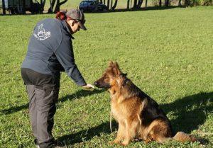 Обучение собаки команде «нельзя»