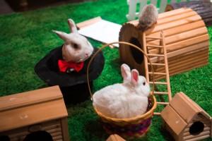 кролик в смокинге