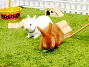 кролики = ферма