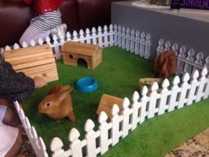 кролики, утята и цыплята