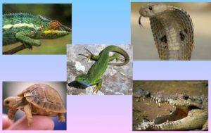 Кто такие пресмыкающиеся или рептилии