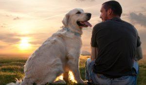 Жизнь с доминантной собакой