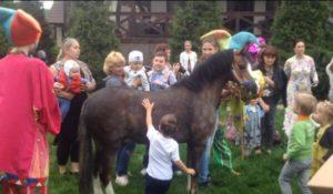 Уэльский пони
