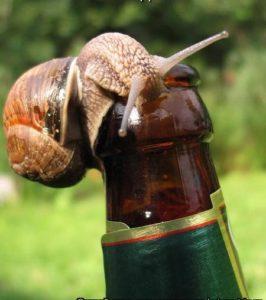 Животные-алкоголики