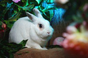 8(965)380-13-11 - кролики на праздник