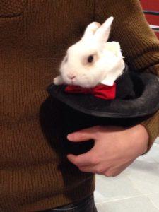 8(965)380-13-11 - Кролик в смокинге