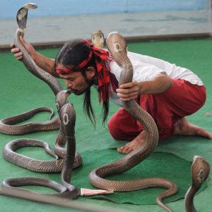 Мероприятия со змеями 8(965)380-13-11