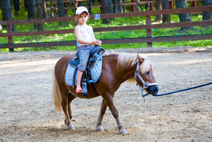 Прокат лошадок и пони 8(965)380-13-11