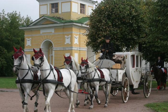Свадебные кареты и конный эскорт телефон 8(965)380-13-11