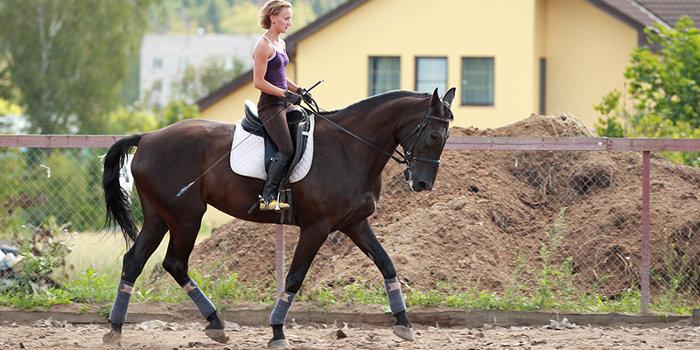 Верховая езда в Москве и Подмосковье 8(965)380-13-11