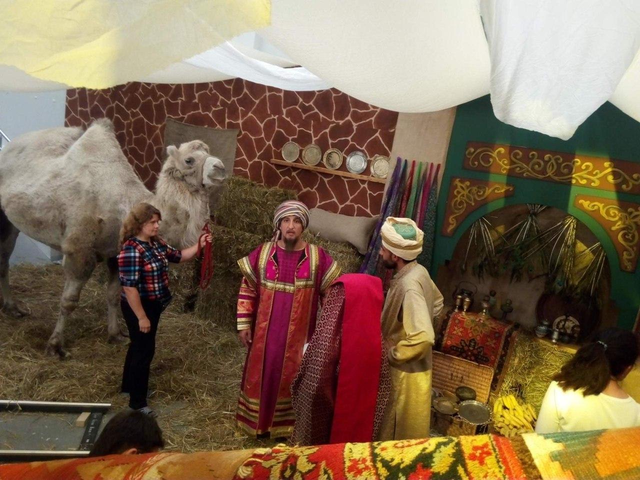 Верблюд: катание и фотосессия