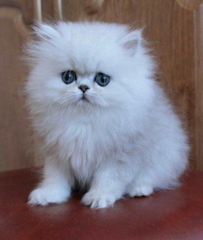 Котёнок напрокат от компании Zooteatr: Самые милые и красивые котята на ваши съёмки