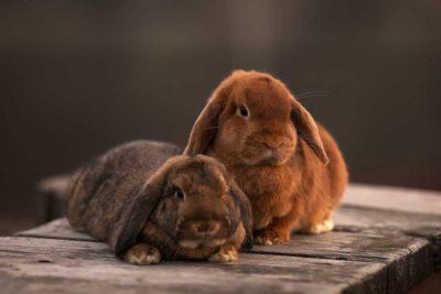 Очаровательные кролики на фотосессию: Пасхальные, детские и другие съёмки с ушастиками